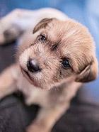 超可爱的狗宝宝