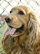 超可爱的狗狗  大耳朵BOBBY写真照