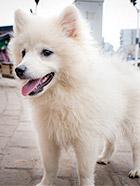 路边遇见的可爱小狗