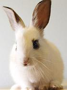 晒晒我家的小萌兔