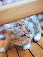 发现一只超萌的猫咪