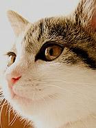超级呆萌的一只家猫