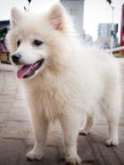 路边遇见的可爱狗狗