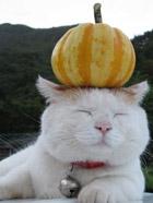 猫叔头顶蔬菜犯傻写真