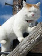 世界上最知足悠闲的猫——猫叔