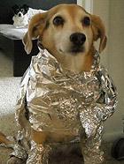 超级搞笑的狗狗图片