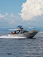 游日本长崎 畅行大海看海豚