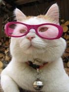 日本猫叔的搞怪萌照
