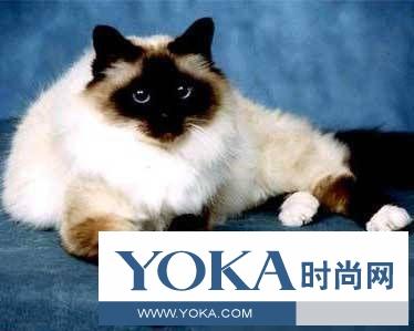 猫咪种类介绍!