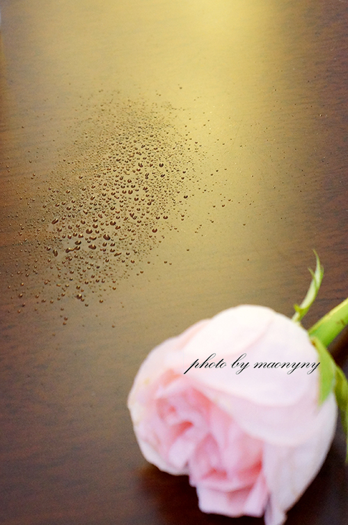 重拾初心,静静体味玫瑰的水润膜力