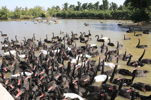 亲子游的好去处——玩转长隆野生动物世界&飞鸟乐园